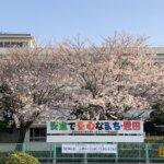 桜満開:地区の桜名所5選