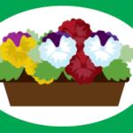 花の苗植え(まちづくりサークル)